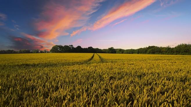 Китай купува земеделски земи по света с размах