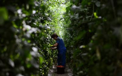 България с най-голям ръст на биологичното земеделие в ЕС